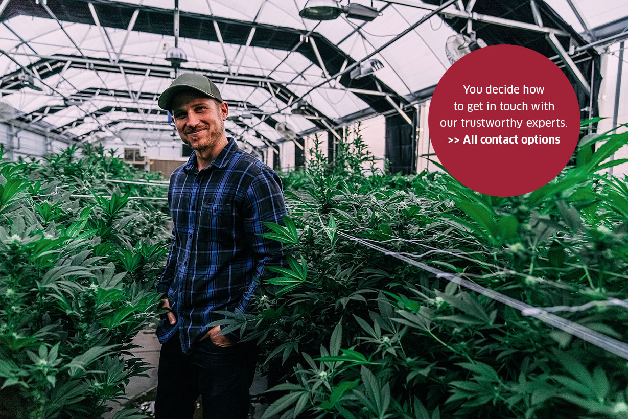 cannabis man in greenhouse mit stoerer